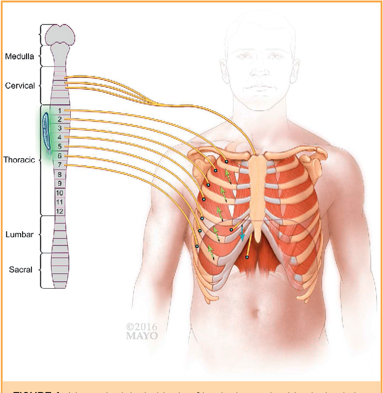 Electrical Neuromodulation Of The Respiratory System After Spinal