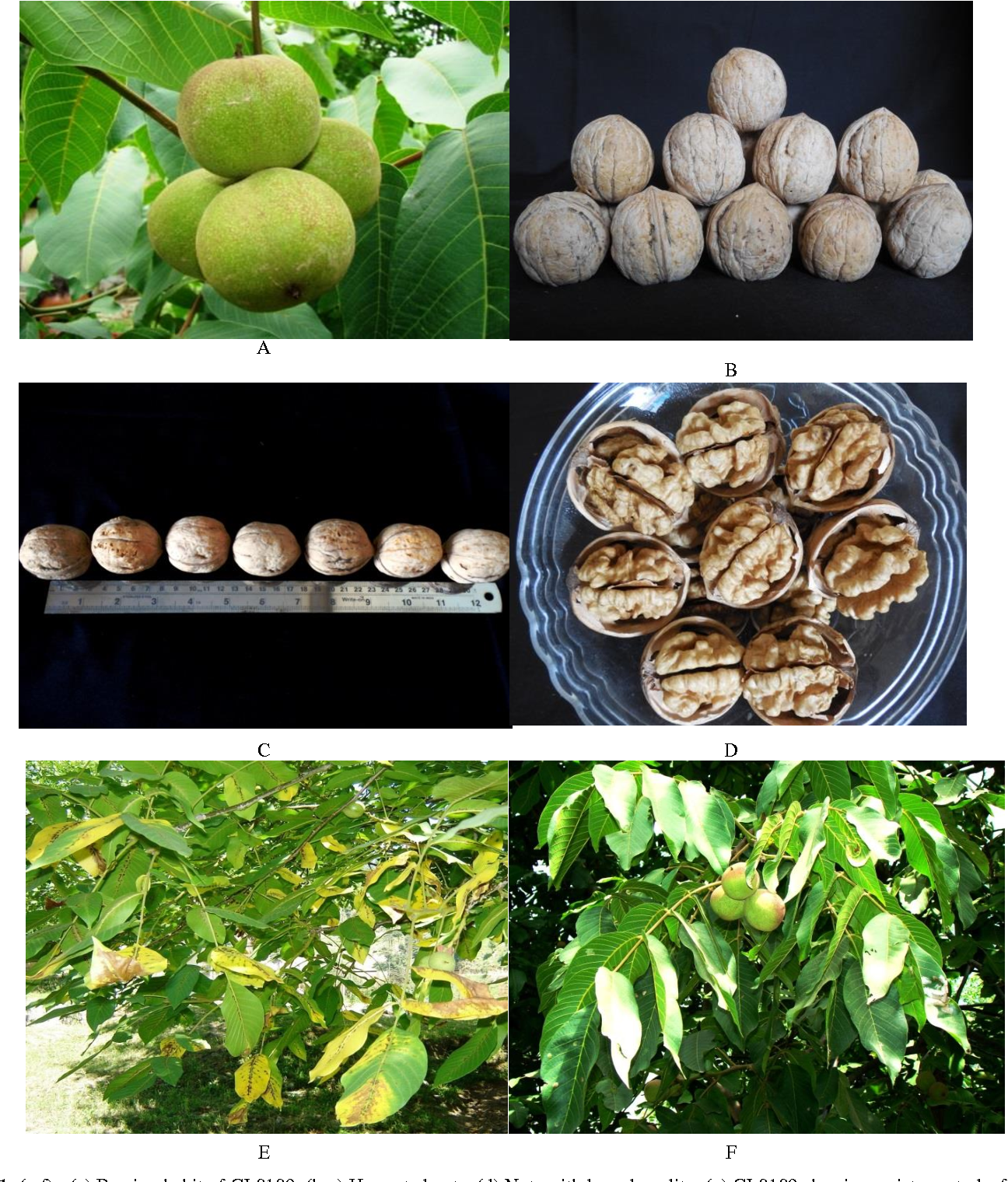 Figure 1 from Selection and characterization of elite walnut