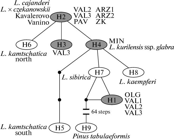 Figure 1 From Mitochondrial Dna Variation In Olga Bay Larch Larix