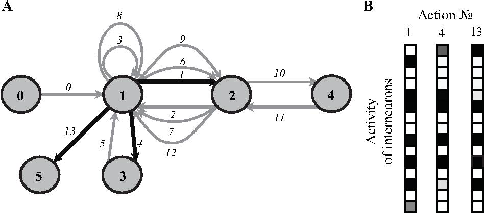 Figure 3 for Neuroevolution Results in Emergence of Short-Term Memory for Goal-Directed Behavior