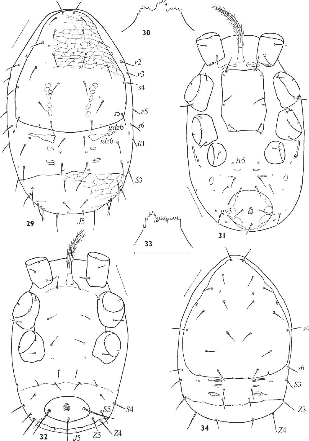 figure 29–34