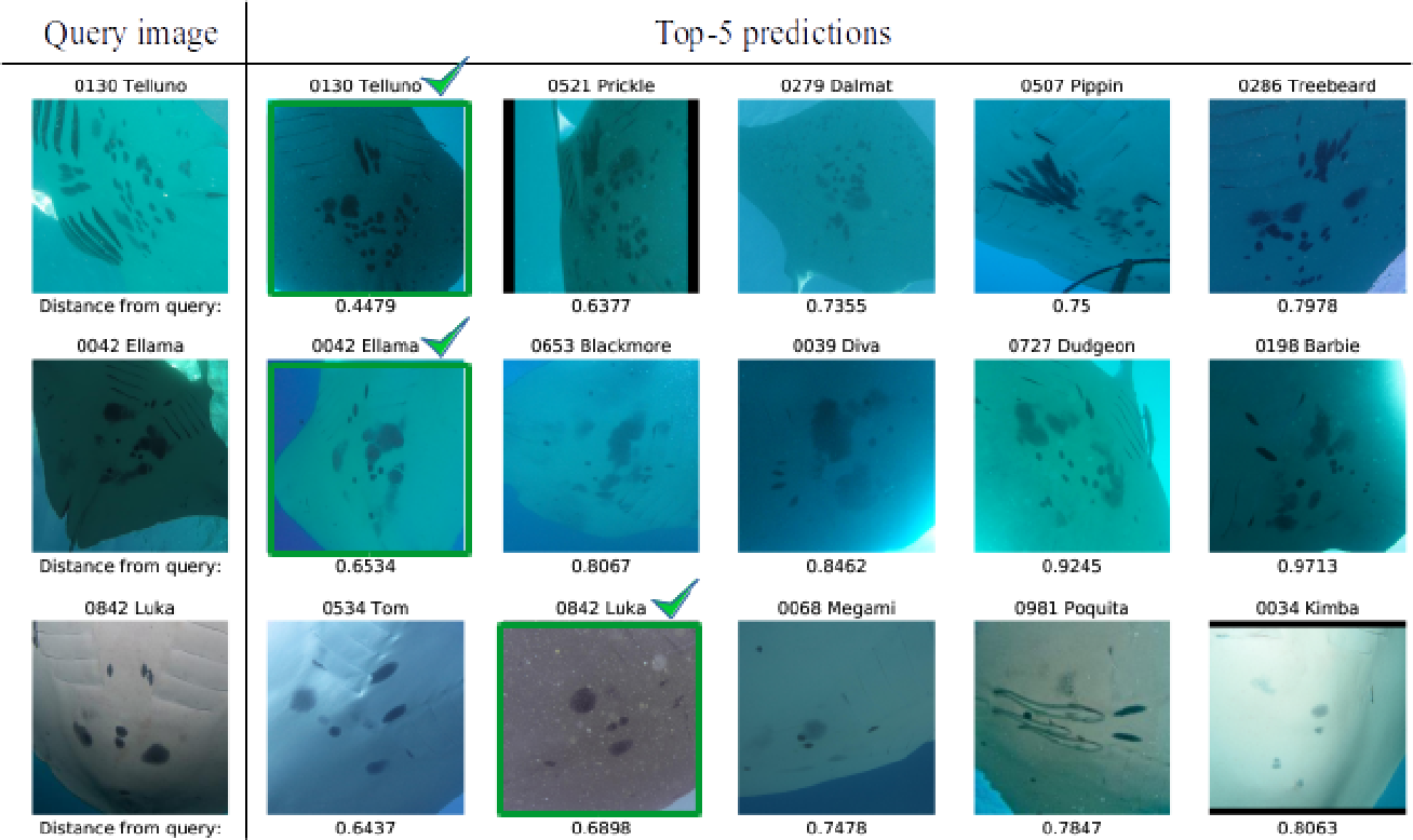 Figure 3 for Robust Re-identification of Manta Rays from Natural Markings by Learning Pose Invariant Embeddings