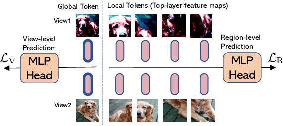 Figure 4 for Efficient Self-supervised Vision Transformers for Representation Learning