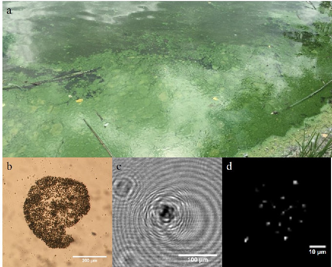 Figure 1 for Design and Experiments with a Robot-Driven Underwater Holographic Microscope for Low-Cost In Situ Particle Measurements