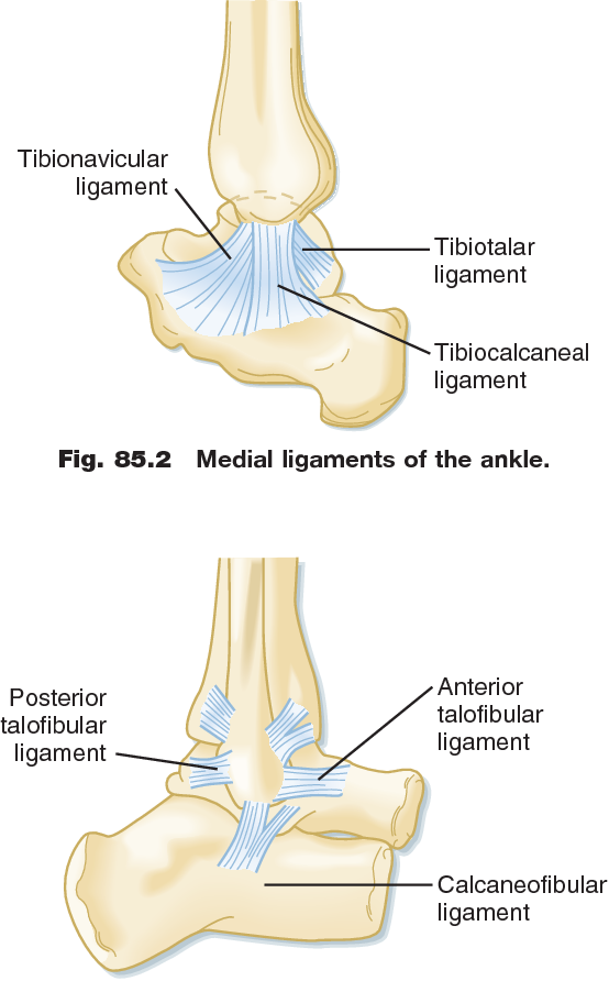 Figure 8515 From Foot And Ankle Injuries Semantic Scholar