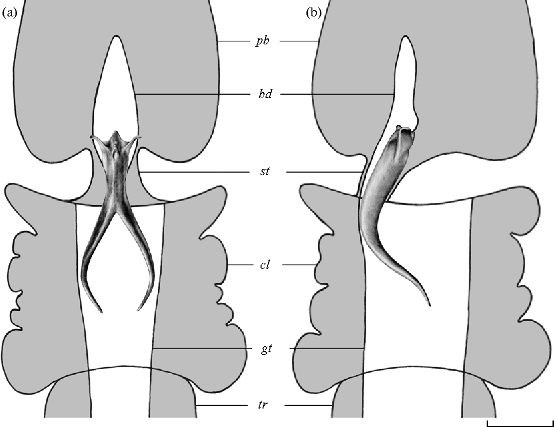 Figure 2 From Microscopic Anatomy And Fine Structure Of The Skeleton