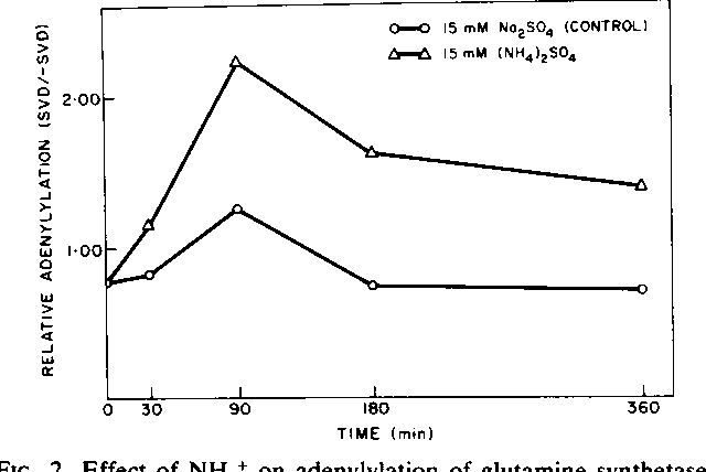 FIG. 2. Effect of NH4' on adenylylation of glutamine synthetase in free-living R. japonicum. All conditions were as described in the legend for Fig. 1. Relative adenylylation values are means of duplicate determinations.