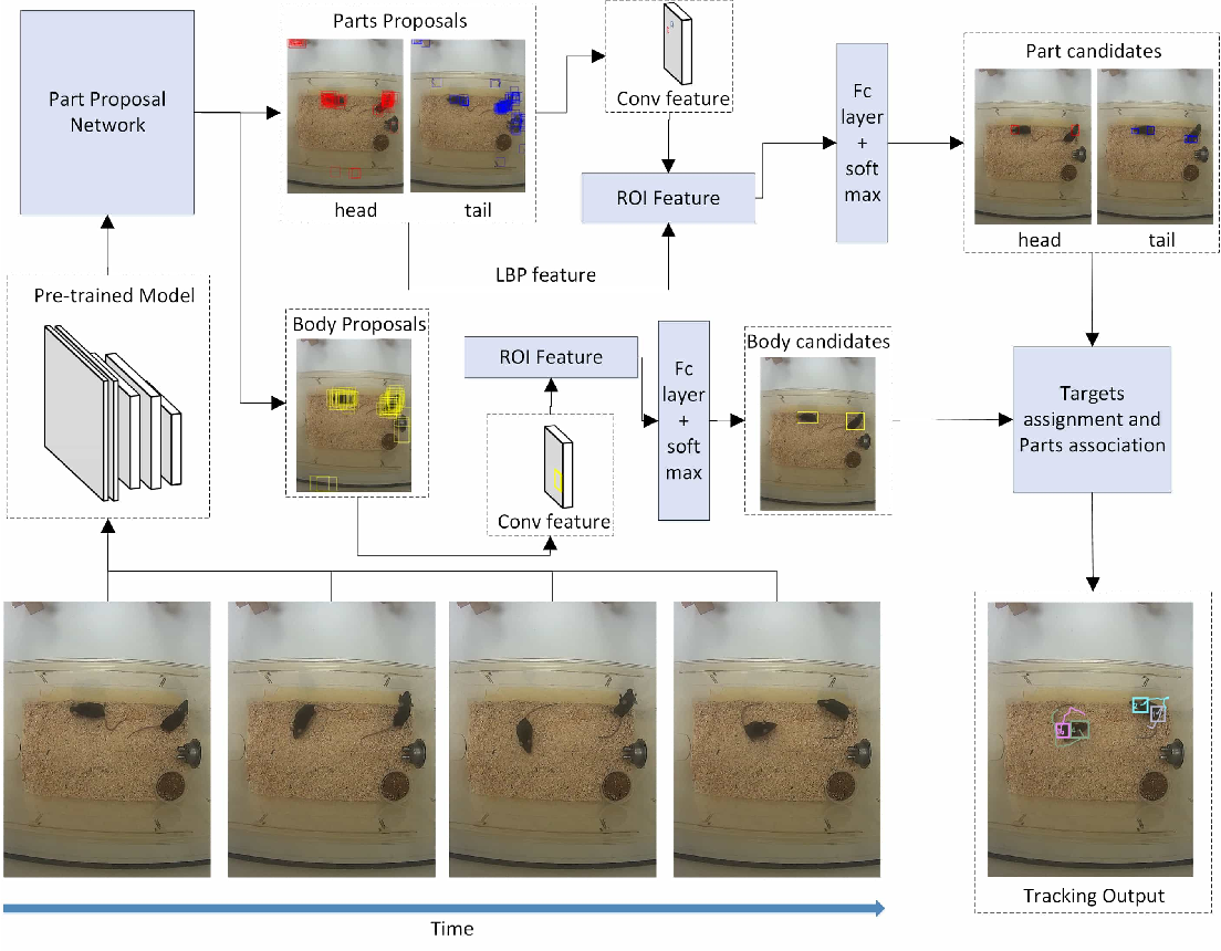 Figure 1 for Detection and Tracking of Multiple Mice Using Part Proposal Networks