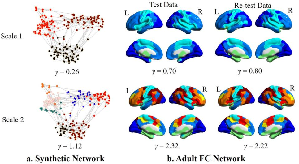 Figure 2 for Co-evolution of Functional Brain Network at Multiple Scales during Early Infancy