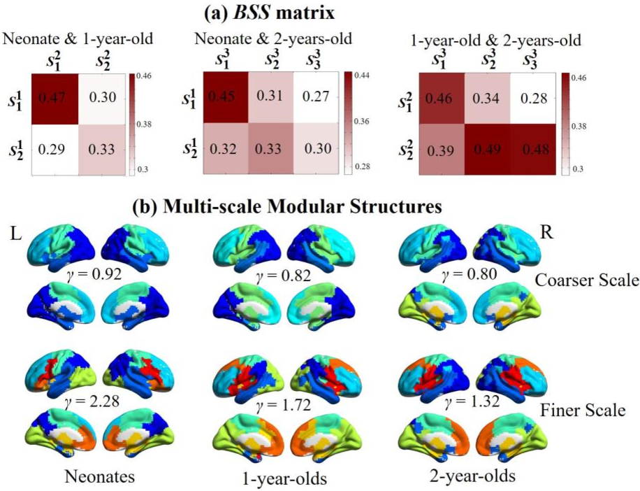 Figure 3 for Co-evolution of Functional Brain Network at Multiple Scales during Early Infancy