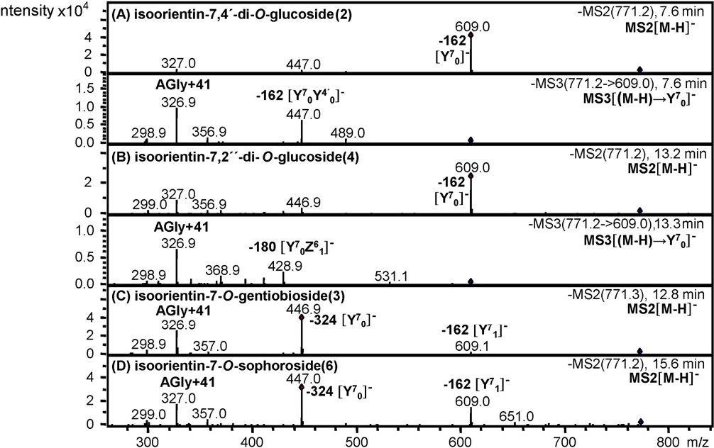 Fig. 3) [11]. In compounds 12 and 27, [(M−H)-180]− uggested a 2′′-O-glucoside, while [(M−H)-150]− in 13 a