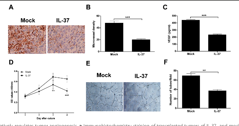 Fig. 3 IL-37 negatively regulates tumor angiogenesis. a Immunohistochemistry staining of transplanted tumors of IL-37- and mock-transfected H1299 cells using anti-CD34 antibody. Representative pictures for two groups are shown. b The tumor microvessel density in two groups was counted. c ELISA analysis of VEGF levels in the cultural supernatants of the IL-37 transfected and mock-transfected H1299 cells. d CCK-8 analysis of HUVEC cells cultured in conditioned medium from supernatants of IL-37 or mock transfected H1299 cells. e The effect of IL-37 on the capillary structure formation was measured using matrigel tubule formation assay. Representative pictures for two groups are shown. f The number of formed capillary tubes in two groups were counted. Data shown are mean ± SD from three independent experiments. **P < 0.01, ***P < 0.001
