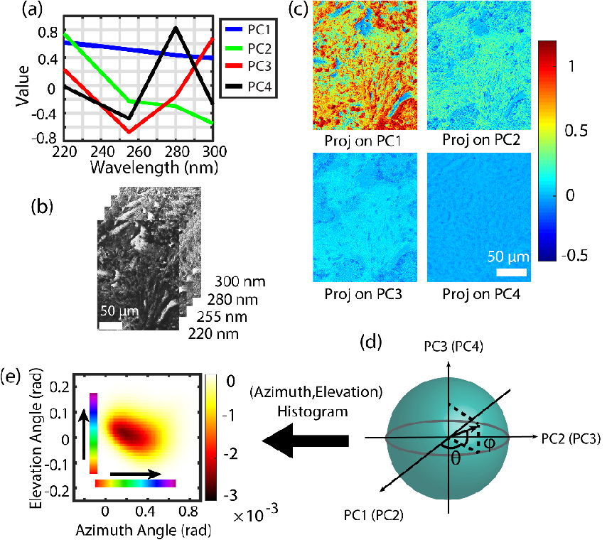 Figure 1 for Prostate cancer histopathology with label-free multispectral deep UV microscopy quantifies phenotypes of tumor grade and aggressiveness