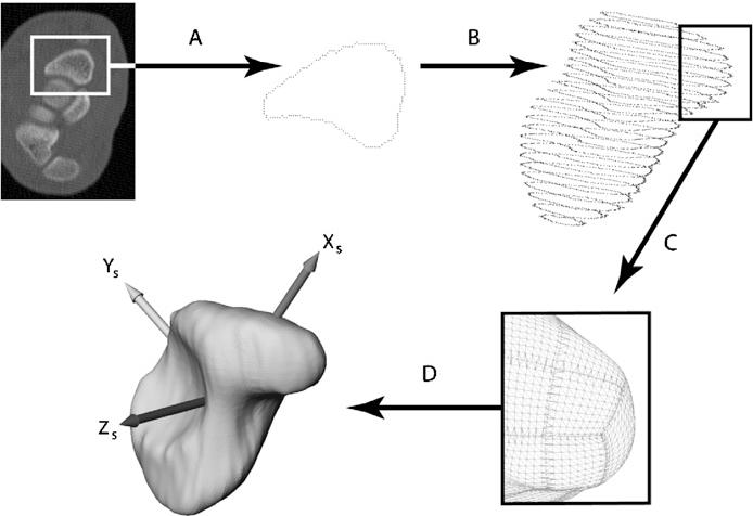 A Digital Database Of Wrist Bone Anatomy And Carpal Kinematics