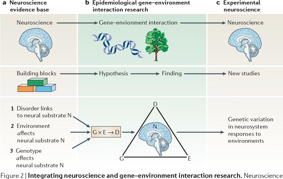 Gene Environment Interaction >> Figure 2 From Gene Environment Interactions In Psychiatry Joining