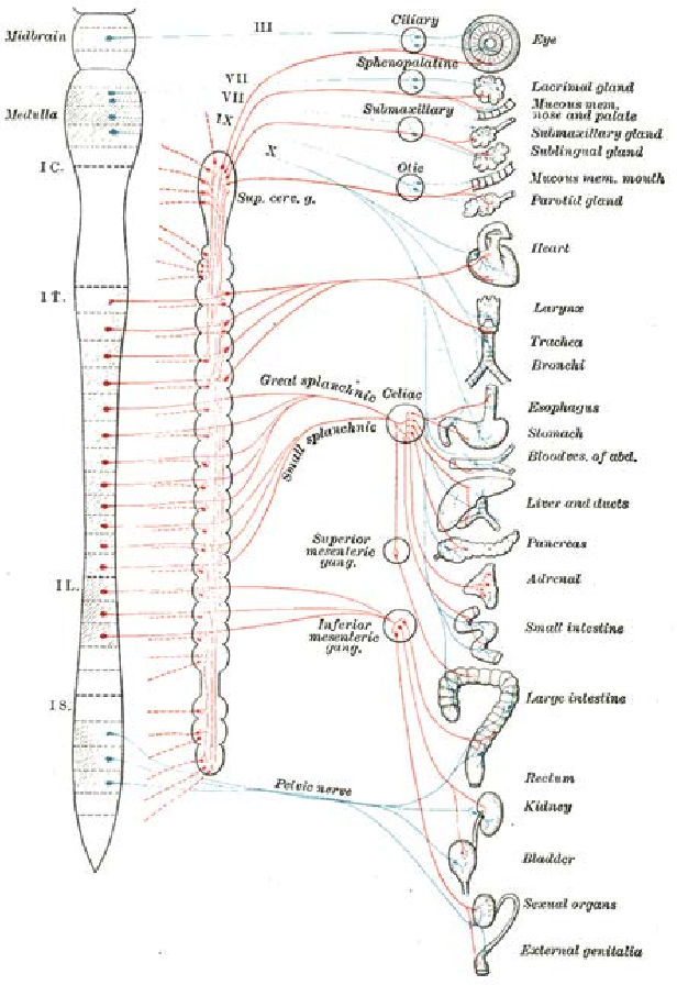 Figure 6 from Neuroanatomy and physiology. - Semantic Scholar