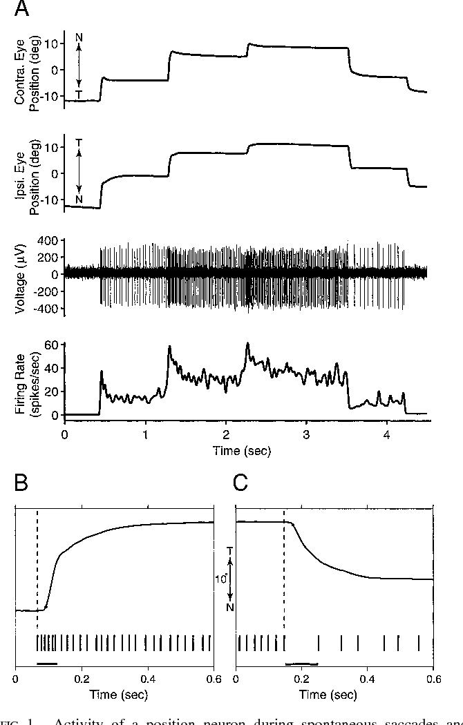 Anatomy and discharge properties of pre-motor neurons in the ...