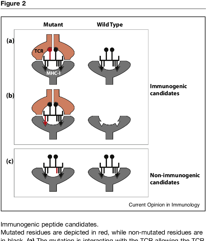 Figure 2 from Characterizing neoantigens for personalized cancer