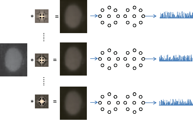 Figure 3 for HEp-2 Cell Classification via Fusing Texture and Shape Information