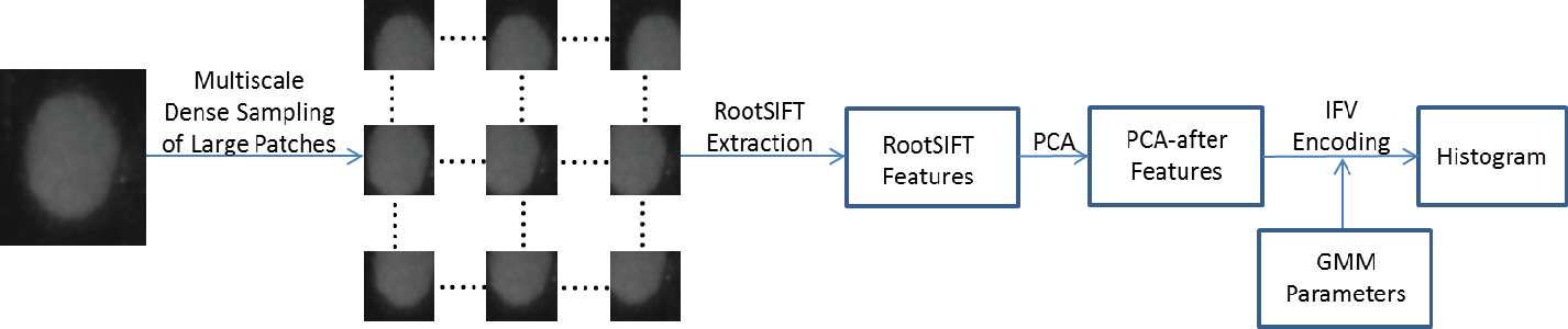 Figure 4 for HEp-2 Cell Classification via Fusing Texture and Shape Information
