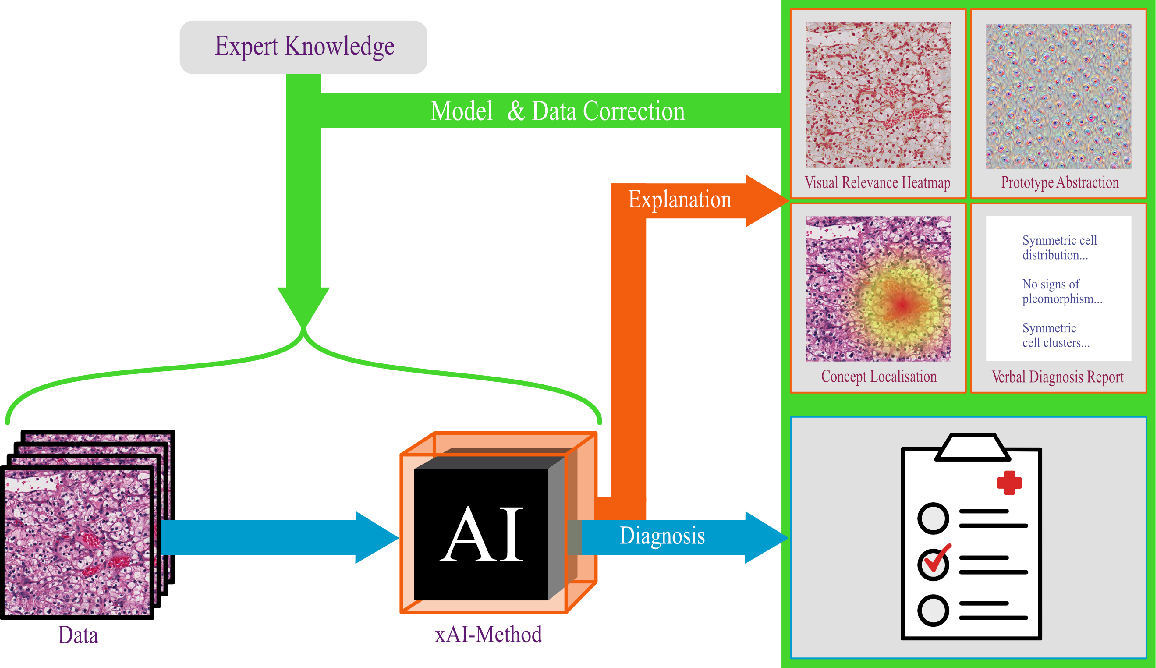 Figure 1 for Achievements and Challenges in Explaining Deep Learning based Computer-Aided Diagnosis Systems