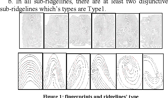 Figure 1: fingerprints and ridgelines' type