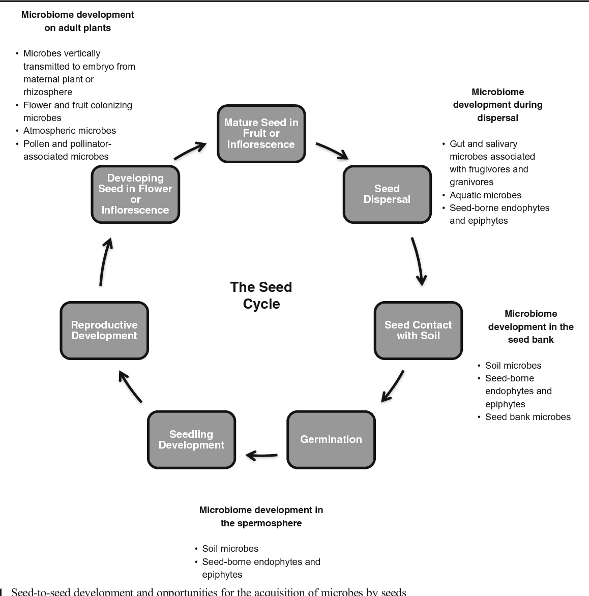 The Seed Microbiome Origins Interactions And Impacts Semantic Germination Diagram Scholar
