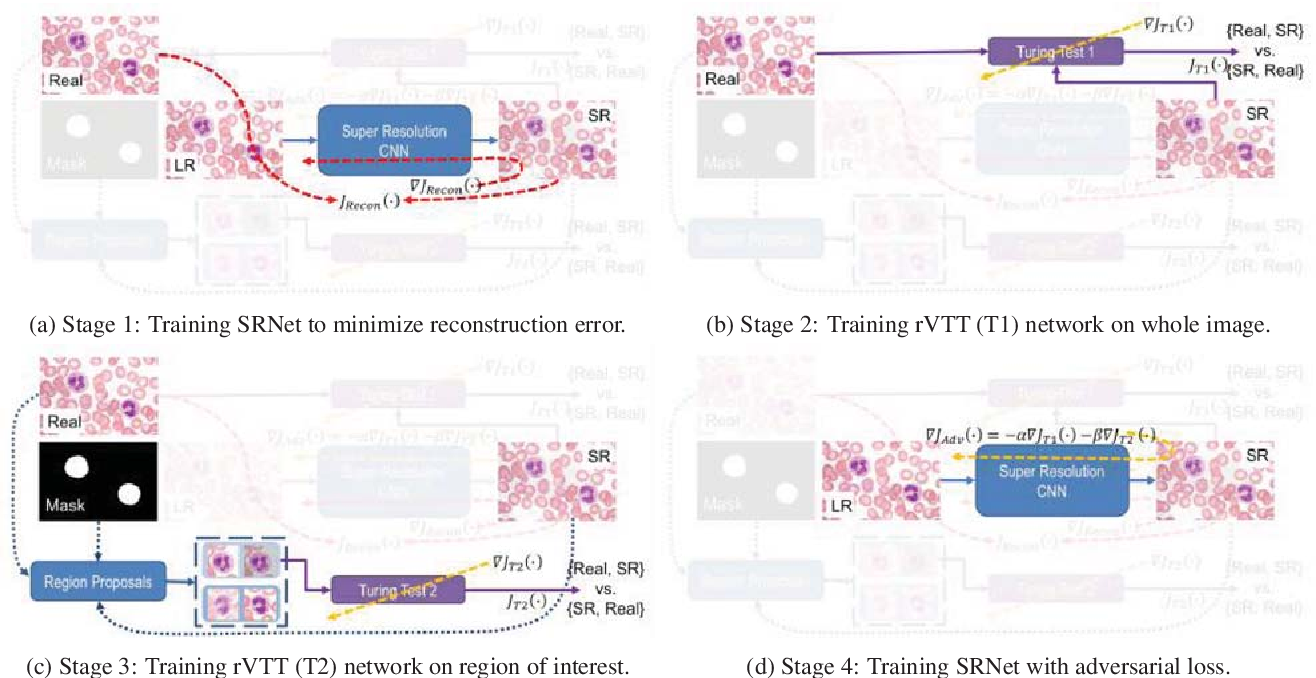 Figure 3 for Learning a Deep Convolution Network with Turing Test Adversaries for Microscopy Image Super Resolution