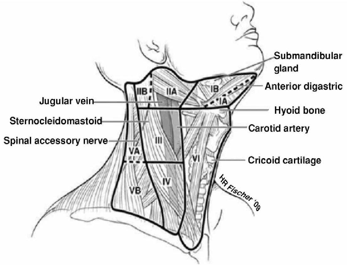 Neck Dissection Diagram - Online Schematic Diagram •