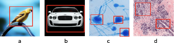 Figure 1 for Microscopic fine-grained instance classification through deep attention