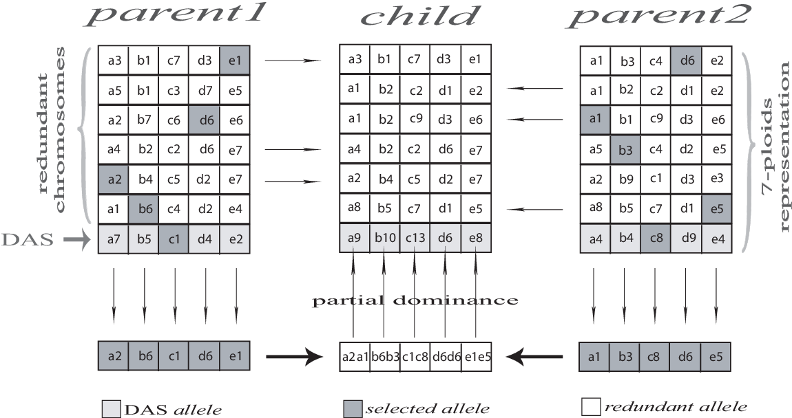 Figure 2 for Polyploidy and Discontinuous Heredity Effect on Evolutionary Multi-Objective Optimization