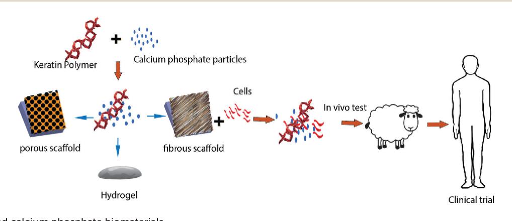 [pdf] keratin: dissolution, extraction and biomedical application  -  semantic scholar