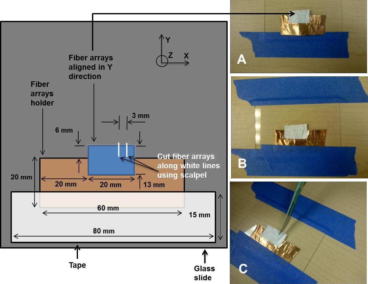 PDF] Gecko-Inspired Electrospun Flexible Fiber Arrays for Adhesion