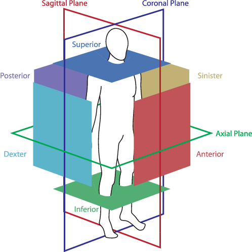 Figure 2 for ConvNet-Based Localization of Anatomical Structures in 3D Medical Images
