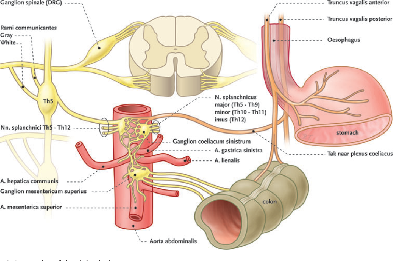 Figure 1 from Evidence-Based Interventional Pain Medicine According ...