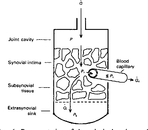 Figure 6 From Absorption Of Artificial Efisions From Synovial Joints