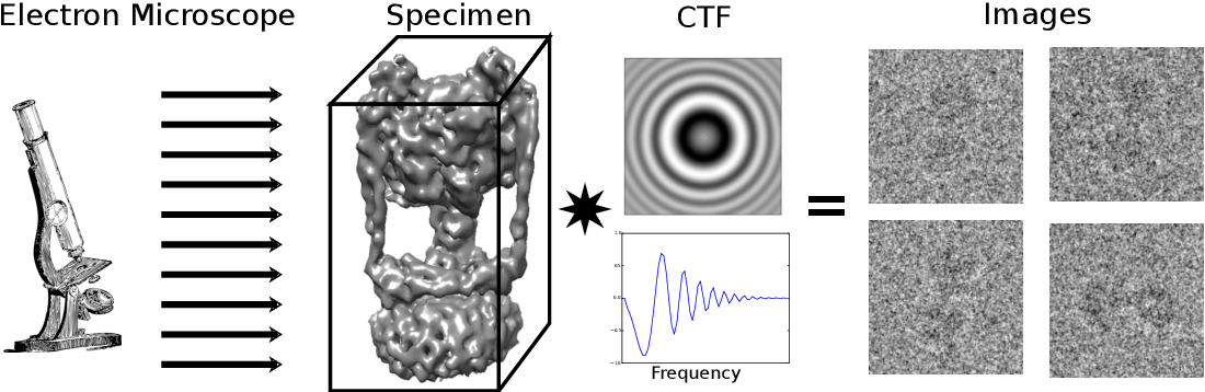 Figure 1 for Microscopic Advances with Large-Scale Learning: Stochastic Optimization for Cryo-EM