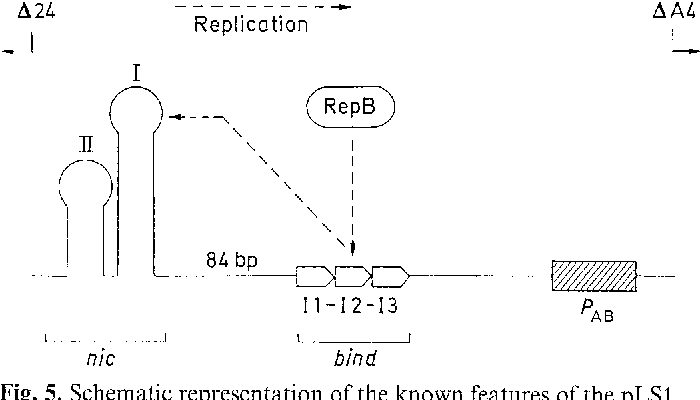 Figure 5 from In vivo definition of the functional origin of ...
