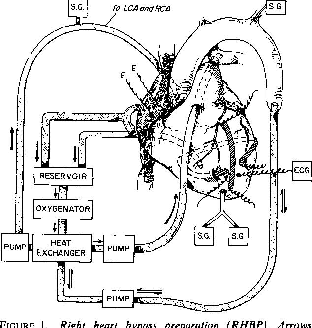 Rca Jack Diagram