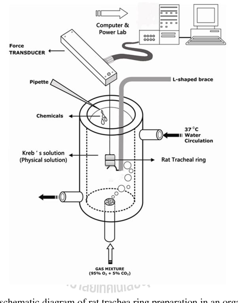 Figure 3.2 from ANTISPASMODIC EFFECTS OF VOLATILE OIL FROM GINGER ...