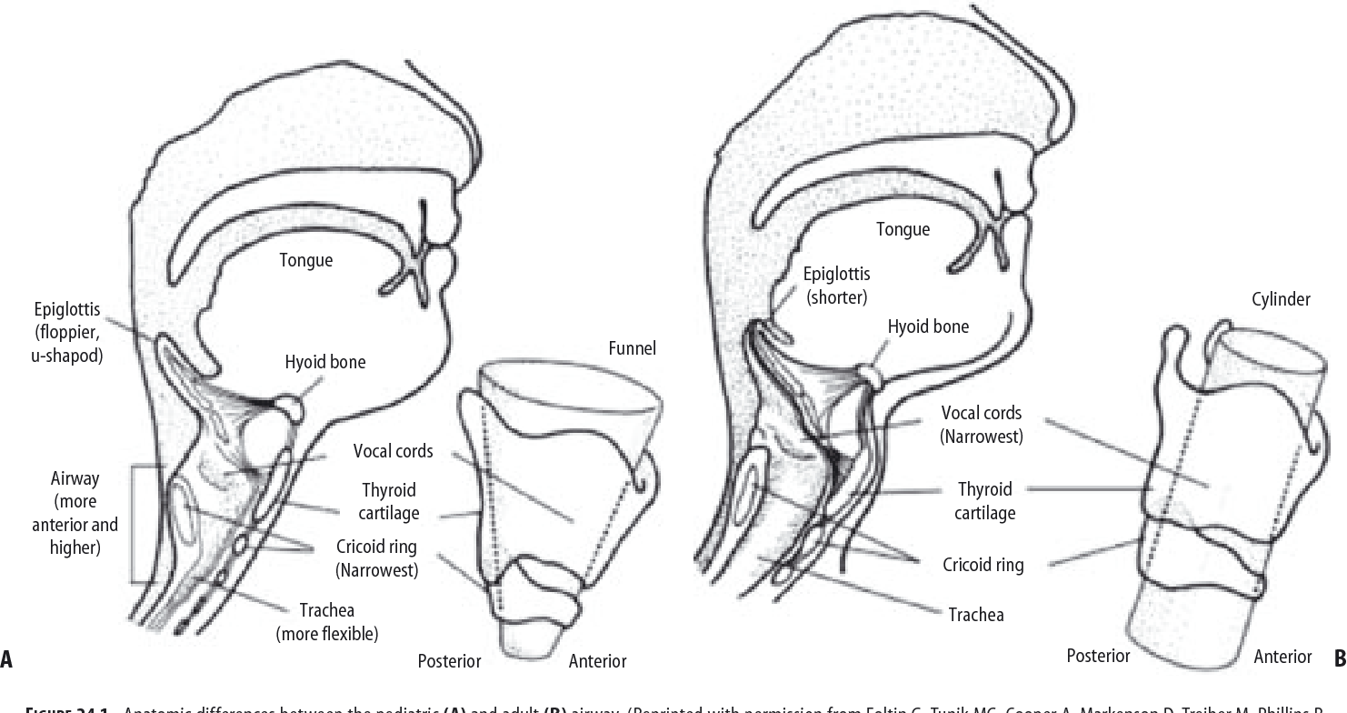 Assessment and Management of the Pediatric Airway - Semantic Scholar