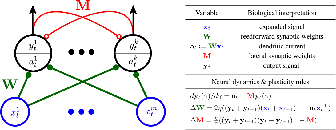 Figure 1 for A biologically plausible neural network for Slow Feature Analysis