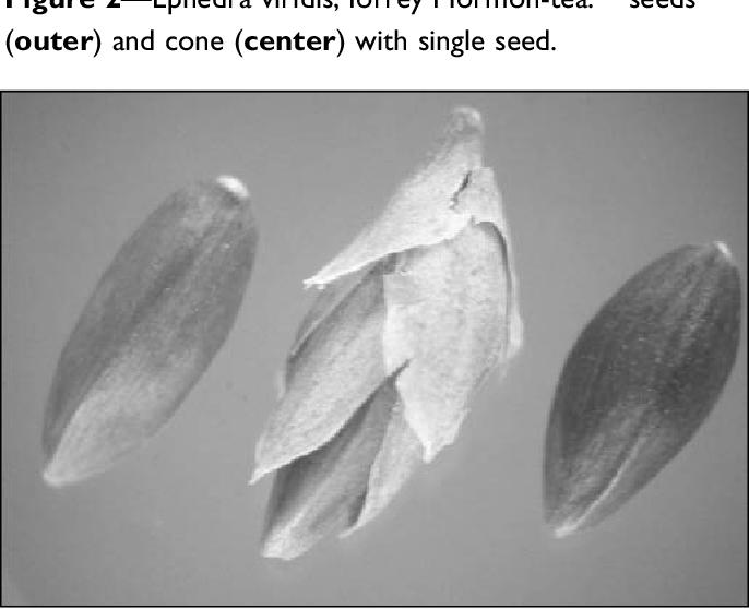 Figure 2 from Ephedra L : ephedra or Mormon-tea - Semantic