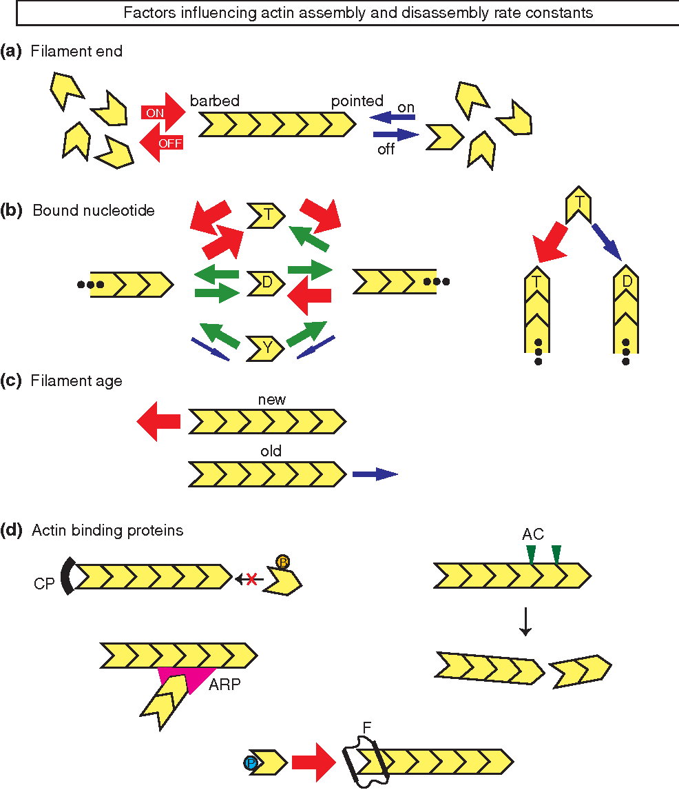 Figure 1 From WIREs Systems Biology And Medicine Modeling
