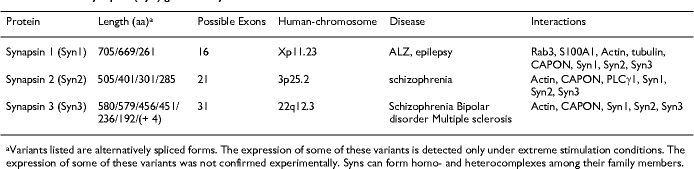 Table 2: Human synapsin (Syn) gene family.