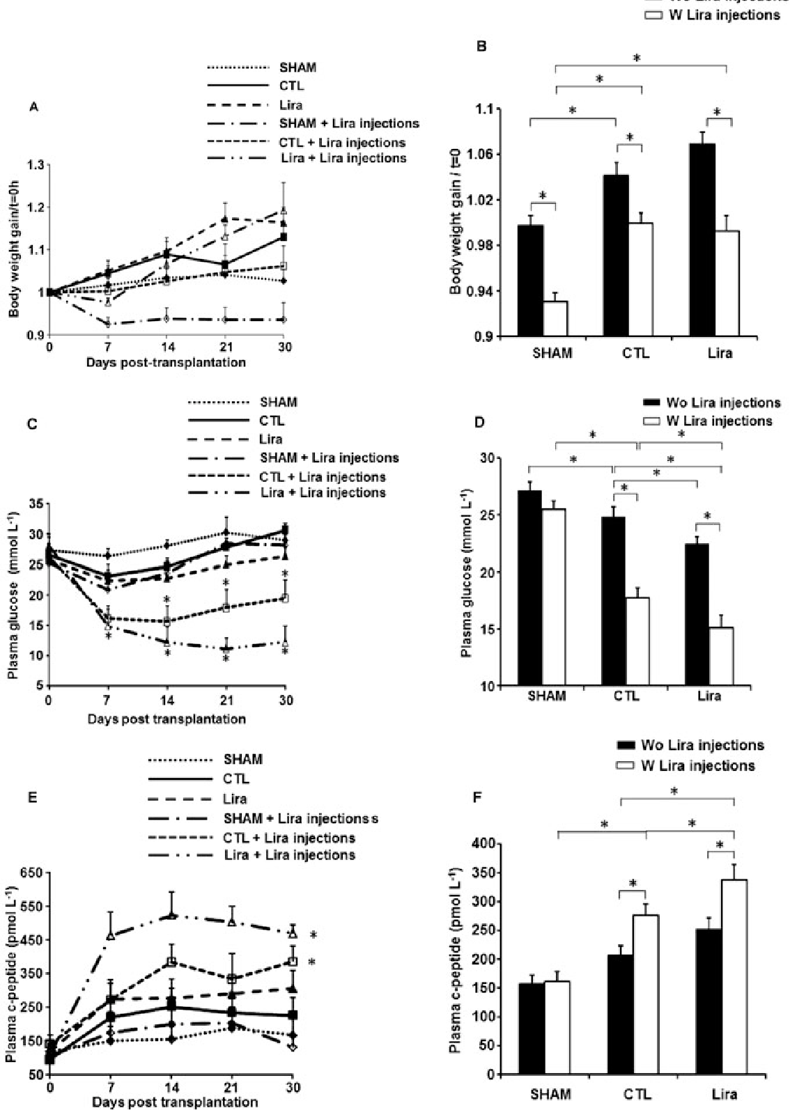 Figure 5 Metabolic control in diabetic rats after islet transplantation. Effects of liraglutide (Lira) on (A) body weight, expressed relative to weight on day 0, during the 30 days of the experiment and (B) mean body weight gain over the entire experiment. In (C), fasting glycaemia during the 30 days of the experiment and (D) mean fasting glycaemia over the entire experiment. In (E), fasting C-peptide levels during the 30 days of the experiment and (F) mean fasting levels of C-peptide over the entire experiment. The experimental groups are as follows: sham; control (CTL) islet- or liraglutide-treated islet-transplanted groups of rats, with (W) or without (Wo) liraglutide injections. Results were expressed as mean ± SEM; n = 6 each group. * P < 0.05, significantly different as indicated; one-way ANOVA with Tukey's test.