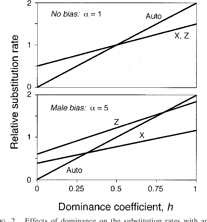 FIG. 2. Effects of dominance on the substitution rates with and without male-biased mutation. Rates are scaled relative to an autosomal locus with additive mutations (h 5 1/2), and equal selection on both sexes is assumed.
