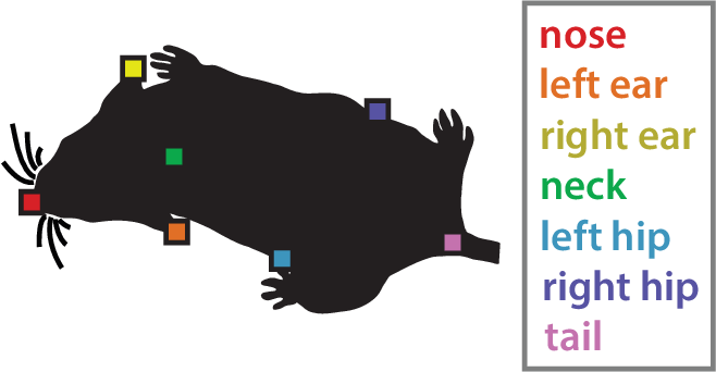 Figure 3 for The Multi-Agent Behavior Dataset: Mouse Dyadic Social Interactions