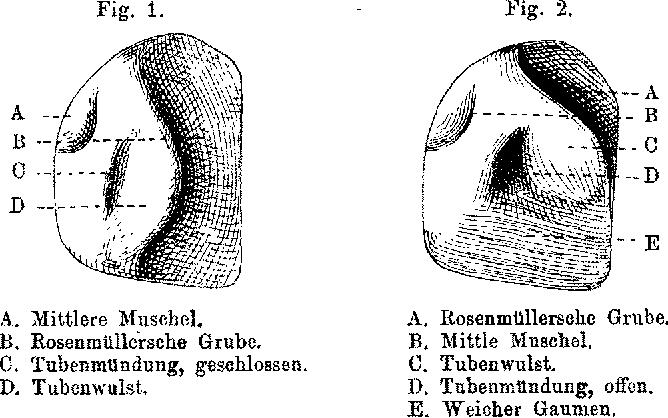 Figure 1 from Die Ohrtrompete (Tuba Eustachii), ihre Anatomie und ...