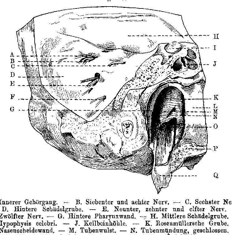 Figure 6 from Die Ohrtrompete (Tuba Eustachii), ihre Anatomie und ...